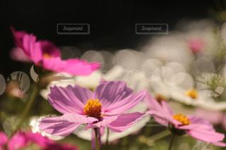 秋の兆しの写真・画像素材[1446200]