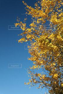 秋空の写真・画像素材[1516731]