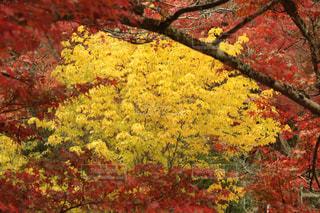 黄色い花の写真・画像素材[1677190]