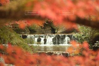 秋の滝の写真・画像素材[1696367]