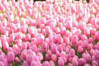 春満開の写真・画像素材[2089762]