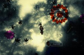 空を飛んでいる鳥の群れの写真・画像素材[1115718]