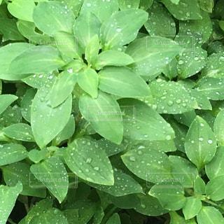 雨の日の写真・画像素材[1170449]