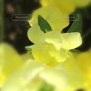 黄色いはなの写真・画像素材[1172083]