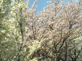 春の写真・画像素材[1254322]