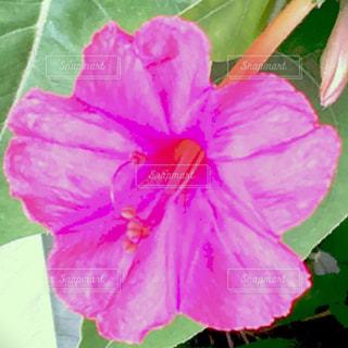 かわいい花の写真・画像素材[1285844]