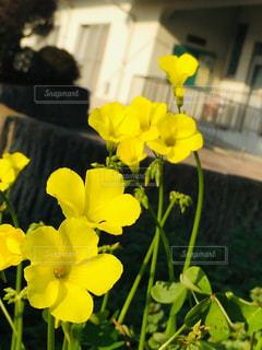 散歩中にみつけた春の写真・画像素材[1813002]