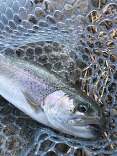 近くに魚のアップの写真・画像素材[1112835]