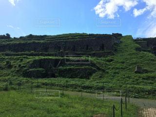 緑豊かな緑の草原に放牧牛の群れの写真・画像素材[1112684]