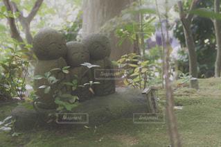 庭に座っているクマの写真・画像素材[1114805]