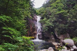 森の中の大きな滝の写真・画像素材[1114809]