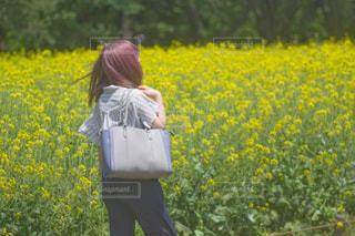 菜の花畑と女の子の写真・画像素材[1172578]
