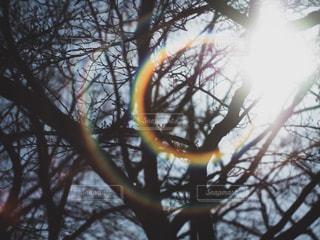 近くの木のアップの写真・画像素材[1119119]