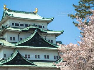 名古屋城と桜の写真・画像素材[1122233]