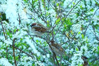 木の枝にとまった鳥の写真・画像素材[1113336]