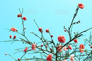 色とりどりの花のグループの写真・画像素材[1113342]