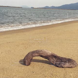浜辺の流木の写真・画像素材[1113383]