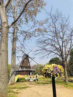 公園の大きな木と風車の写真・画像素材[1113949]