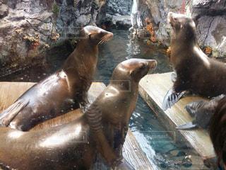 水の動物の写真・画像素材[1114281]
