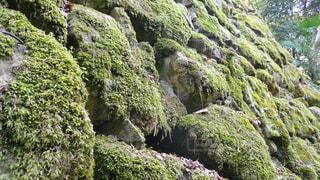 高く積み上がった石垣と苔の写真・画像素材[1115746]