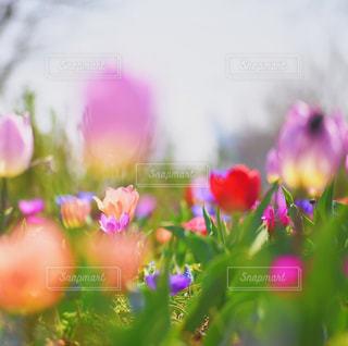 春の花壇の写真・画像素材[1114522]