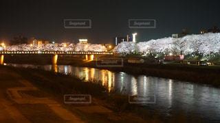 足羽川の桜の写真・画像素材[1114357]