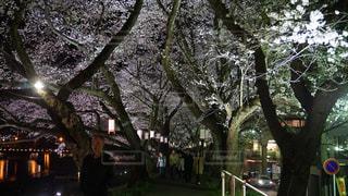 街の通りの真ん中の木の写真・画像素材[1114358]