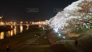 足羽川の桜の写真・画像素材[1114361]