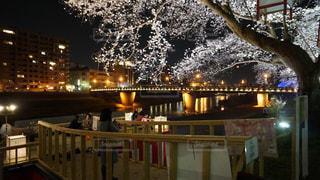 足羽川の桜の写真・画像素材[1114364]