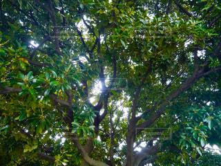 木漏れ日の写真・画像素材[1146429]