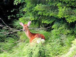 緑豊かな緑の森に動物立っています。の写真・画像素材[1118101]