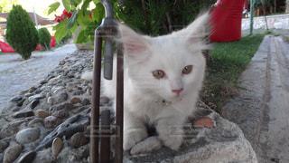 岩の上に座っている猫の写真・画像素材[1120046]