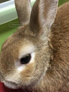近くに動物のアップの写真・画像素材[1114731]