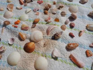 沖縄のビーチの貝殻の写真・画像素材[1502672]