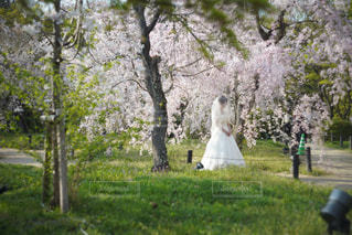happyweddingの写真・画像素材[1114964]