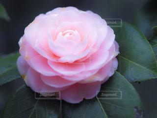 近くの花のアップの写真・画像素材[1117711]