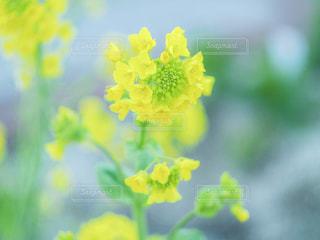 近くの花のアップの写真・画像素材[1117712]