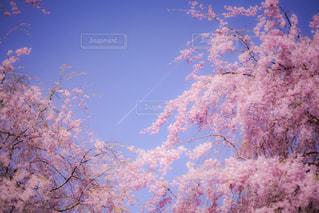 空の木の写真・画像素材[1123235]