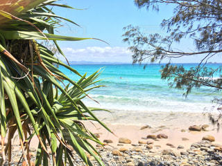ヤシの木とビーチの写真・画像素材[1115075]