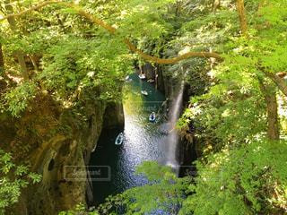 木々 に囲まれた滝の写真・画像素材[1115118]