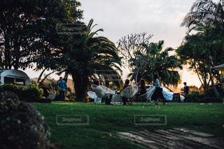 ツリーの横にあるヤシの木のグループの写真・画像素材[1122964]