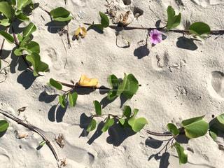 近くの花のアップの写真・画像素材[1137608]