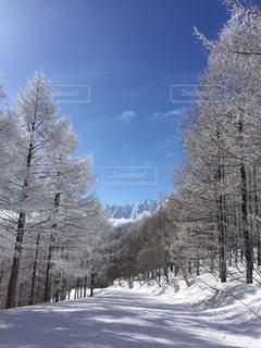 雪の覆われた斜面の木の写真・画像素材[1115492]