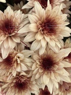 近くの花のアップの写真・画像素材[1115774]