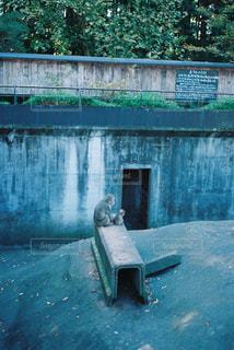 動物園の写真・画像素材[1116724]