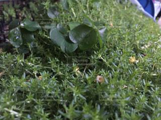 緑のジャングルの写真・画像素材[1117215]