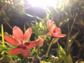 近くの花のアップの写真・画像素材[1117185]