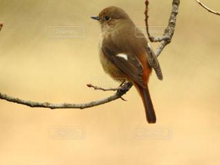 野鳥の写真・画像素材[1188899]