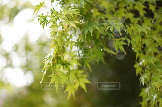 近くの木のアップの写真・画像素材[1201194]