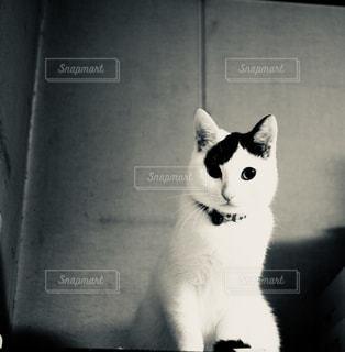 白い面の上に座って猫 - No.1204216